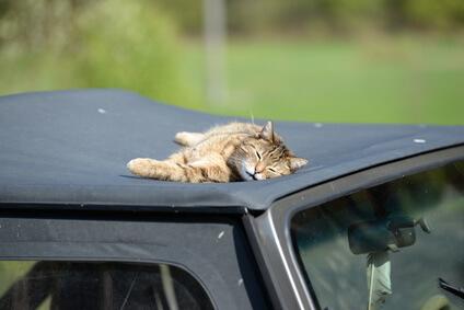 Katze macht Mittagsschlaf auf Cabrio-Stoffdach